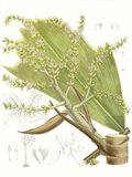 Palm Melange III