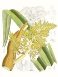 Palm Melange V