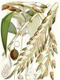 Tropical Variety I