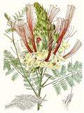 Tropical Variety II
