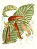 Tropical Variety VIII