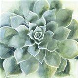 Verdant Succulent II