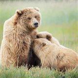 Bear Life II