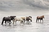 Water Horses IV
