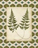 Moroccan Ferns I
