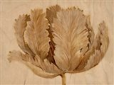 Sepia Tulip on Birch II