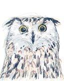 Funky Owl Portrait II
