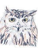 Funky Owl Portrait III