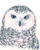 Funky Owl Portrait IV