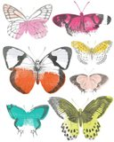 Chromatic Butterflies I
