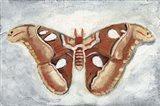 Papillon de Nuit I