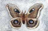 Papillon de Nuit II