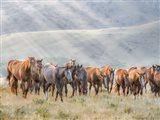 Sunkissed Horses III