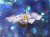 Jewels of the Enchanted Forest VI