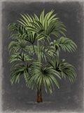 Dramatic Palm I