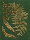 Gilded Ferns I