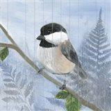 Eastern Songbird II