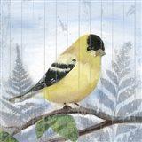 Eastern Songbird III