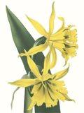 Floral Beauty VIII