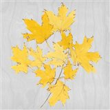 Autumn Leaves VII