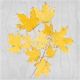 Autumn Leaves VII