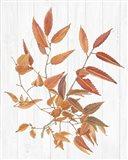 Sweet Foliage I