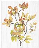 Sweet Foliage III