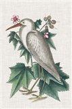 Catesby Heron III