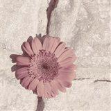 Stone Blossom I