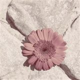 Stone Blossom II