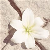 Stone Blossom IV