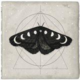 Midnight Moth I