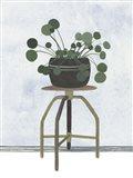 Mes Plants IV