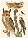 Wilson Owls I