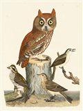 Wilson Owls II