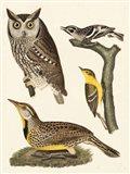 Wilson Owls III