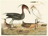 Heron Family IV