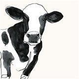 Cow Contour IV