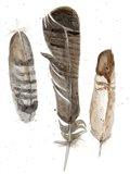 Earthtone Feathers I