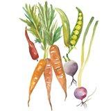 Harvest Medley IV
