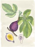 Watercolor Fruit I