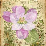 Vintage Apple Blossom II