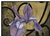 Iris & Scrolls I