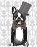 Monsieur Bulldog