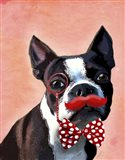 Boston Terrier Portrait with Red Bow Tie and Moustache