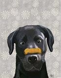 Black Labrador With Bone on Nose