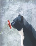Black Cat Sniffing Flower
