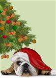 English Bulldog, Cookie Tree