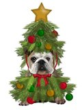 English Bulldog, Christmas Tree Costume