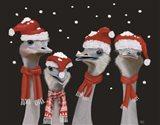 Ostrich, Christmas Gals